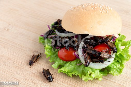 istock Crickets insect for eating as food items in bread burger made of fried insect meat with vegetable on wooden table it is good source of meal high protein edible for future food and entomophagy concept. 1208534128
