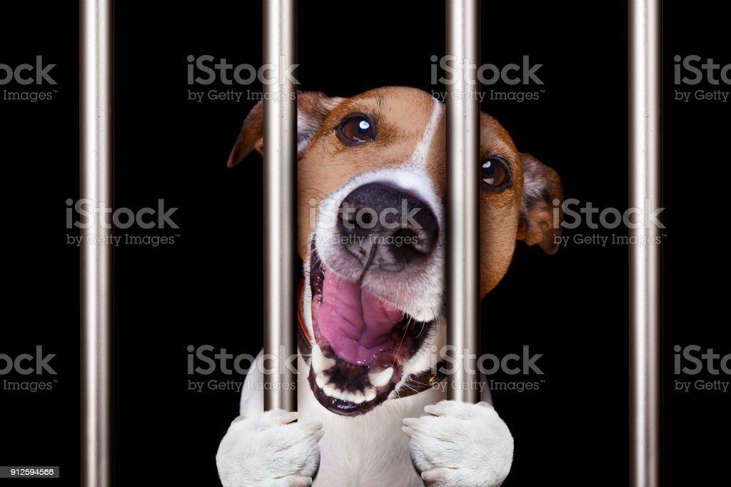 Kriminelle Hund hinter Gittern in Polizei, Gefängnis Gefängnis oder Unterstand für schlechtes Benehmen – Foto