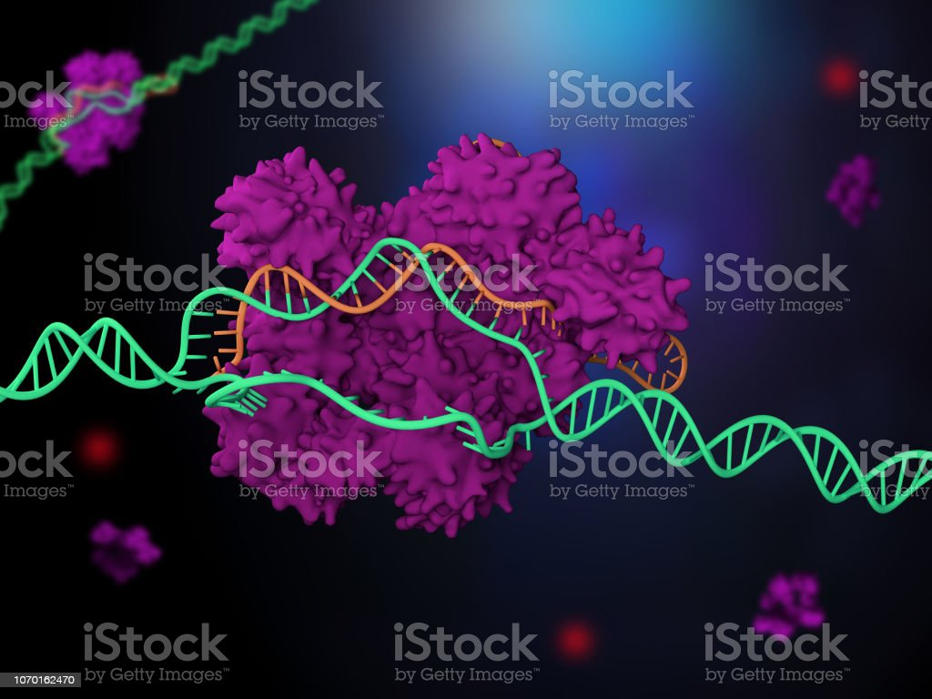 CRISPR-Cas9 genome editing system 3d render of the CRISPR-Cas9 genome editing system Biological Cell Stock Photo