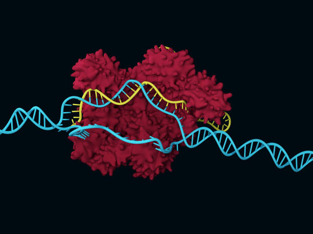 CRISPR-Cas9 stock photo