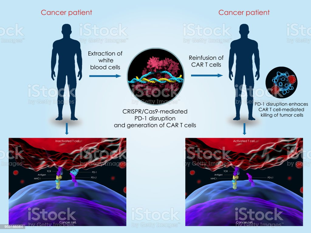 CRISPR-Cas9 system to treat cancer stock photo