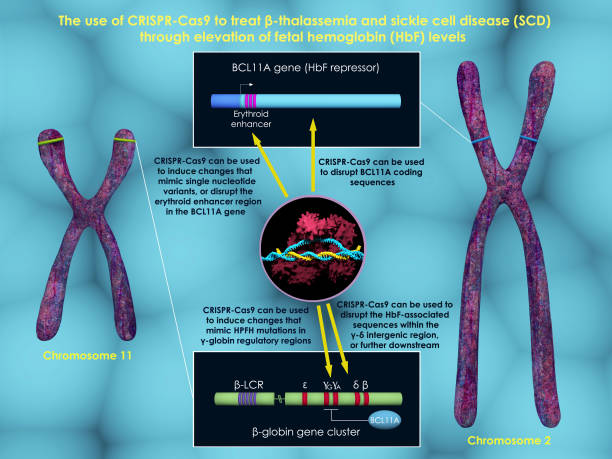 CRISPR-Cas9 to treat beta-thalassemia and sickle cell disease stock photo