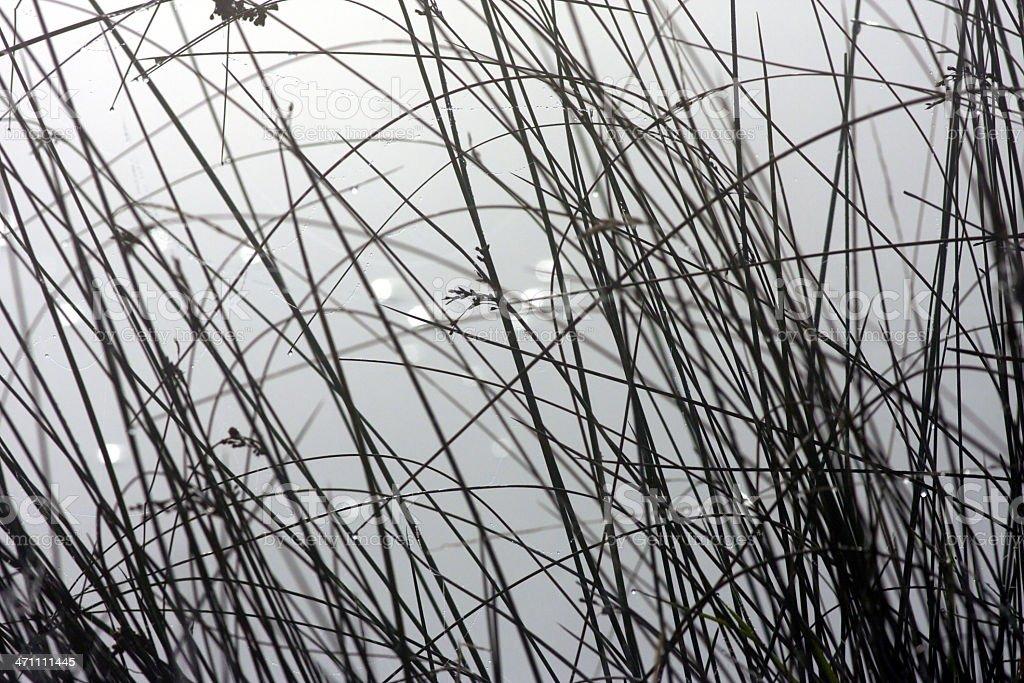 Criss-cross waterside reeds beside foggy lake waters royalty-free stock photo