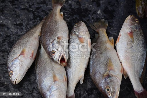 croaker fish Sell in fresh seafood market, note  select focus with shallow depth of field