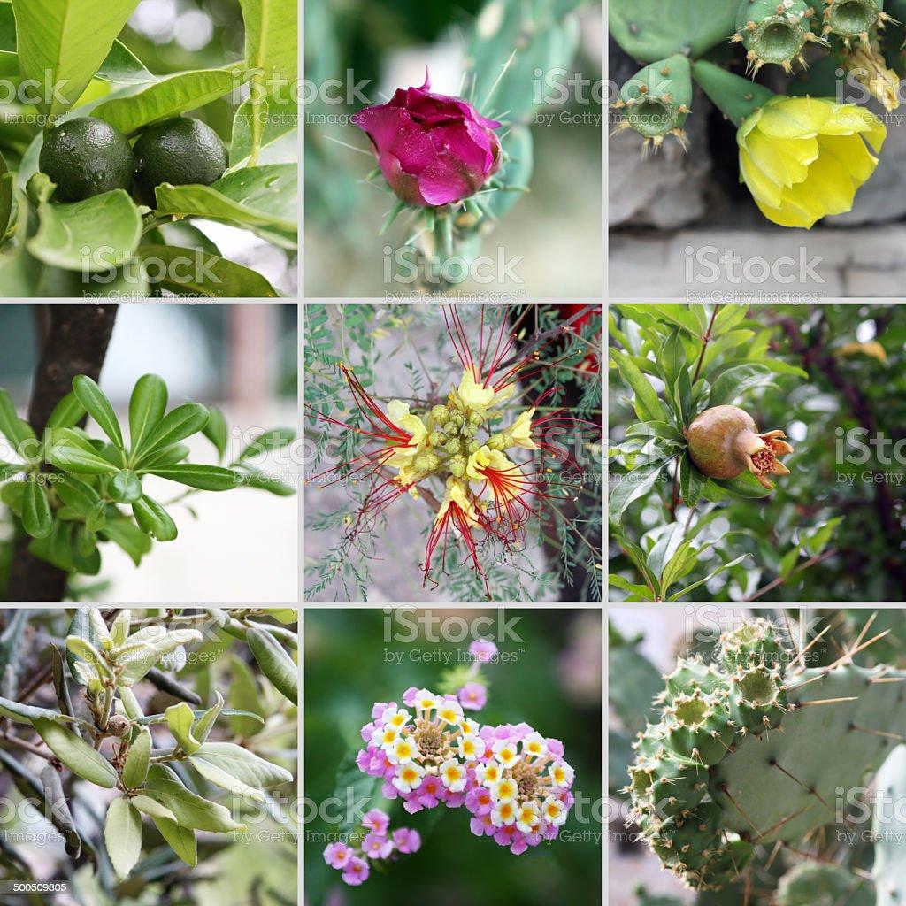 Croatian plants stock photo