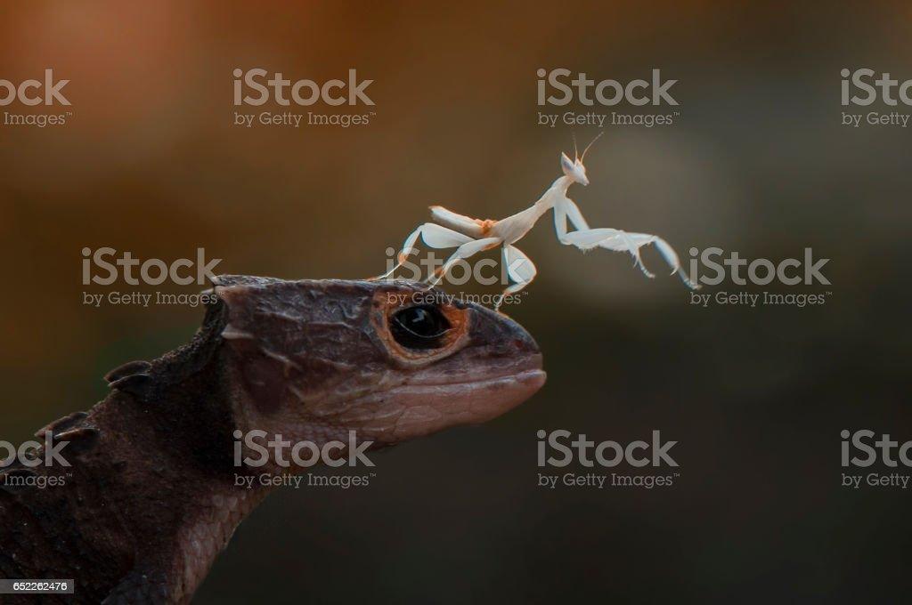 Croc And Mantis stock photo