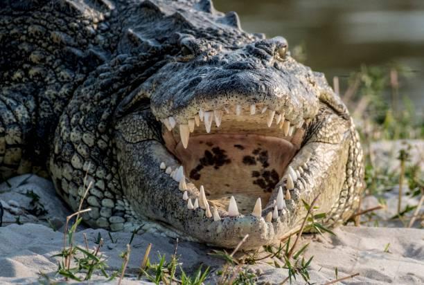 Croc - Photo