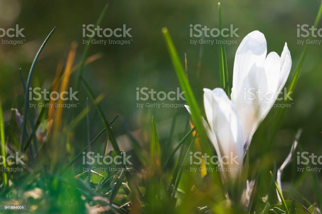 croco nel bosco - macro - foto di stock immagine - foto stock