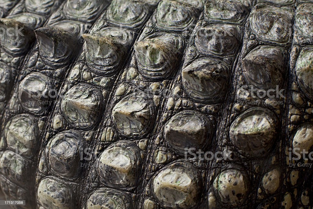 Crocodile armour stock photo