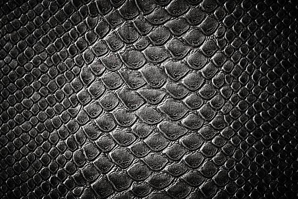 krokodilleder schwarzer haut - schwarze schlange stock-fotos und bilder