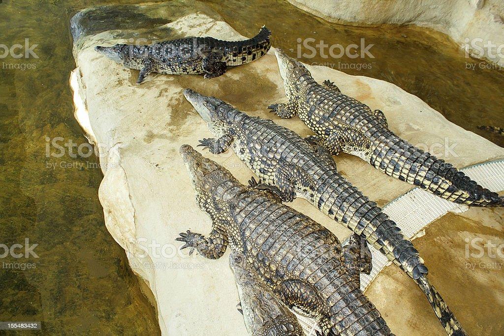 Crocodile farm in Czech Republic royalty-free stock photo