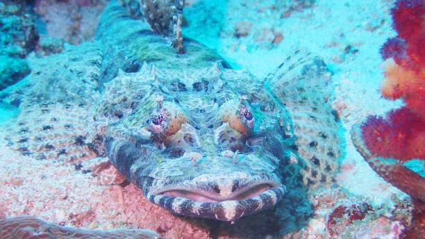 Crocodile Fish stock photo