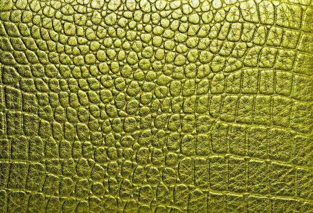 악어 가죽, 골든 사용할 수 있습니다. 배경 - 파충류 뉴스 사진 이미지