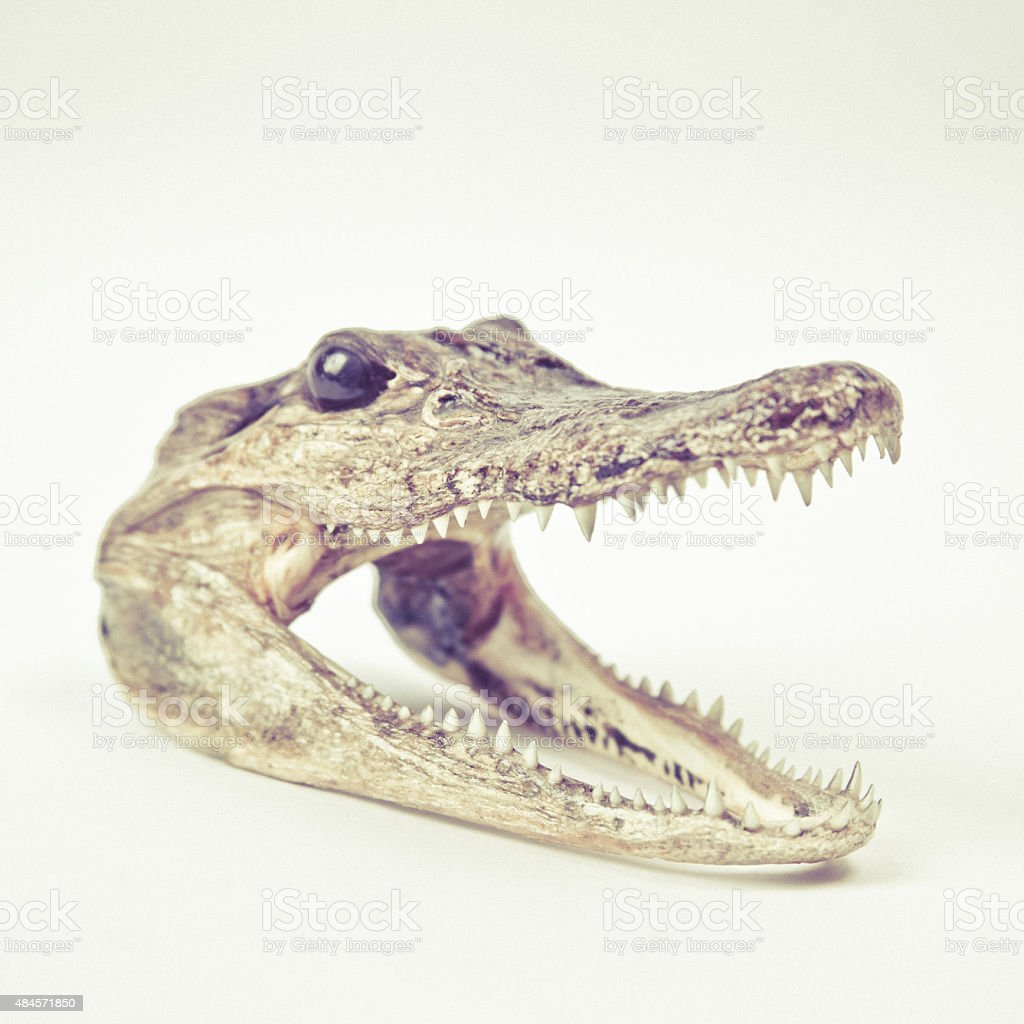 Crocodile Head With Sharp Teeth Stock Photo & More Pictures of 2015 ...