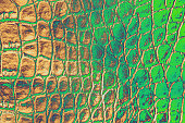 Crocodile Leather Abstract Dragon Dragon Dinosaur Snake Alligator Reptile Texture Ombre Green Brown Beige Background