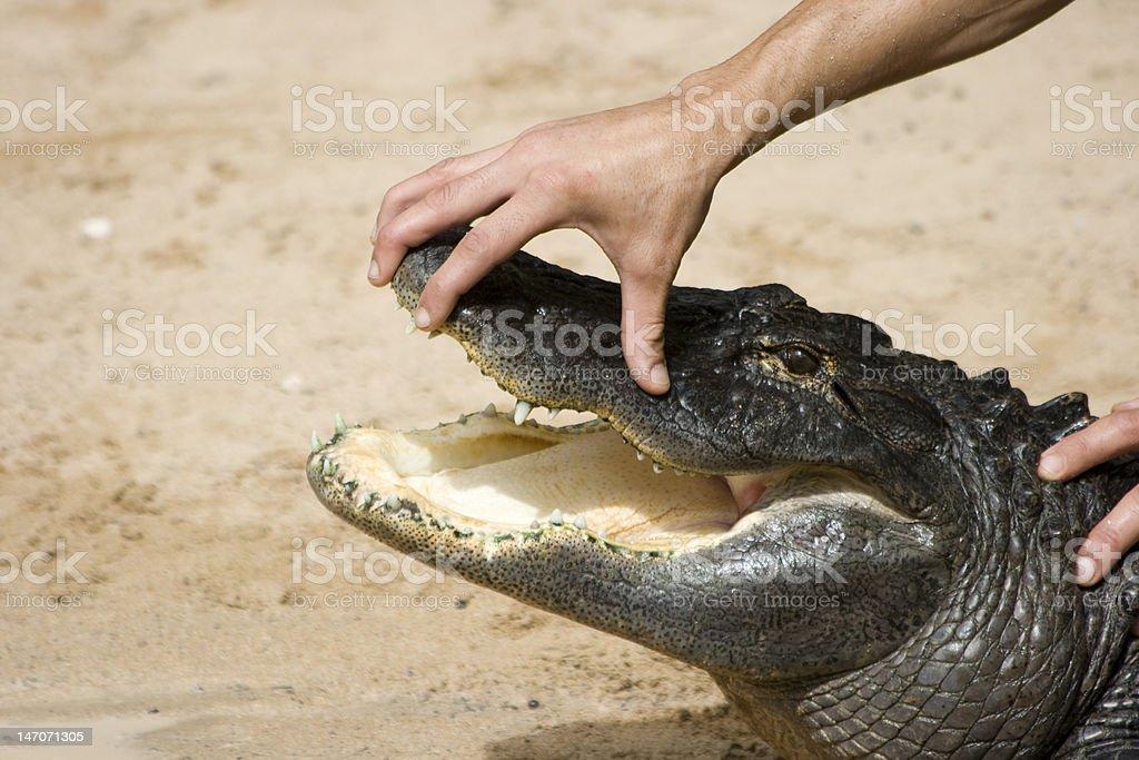 Krokodil – Foto