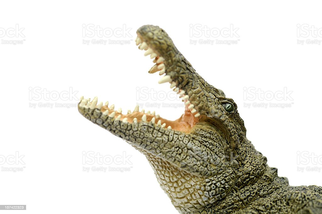 Crocodile showing jaws stock photo