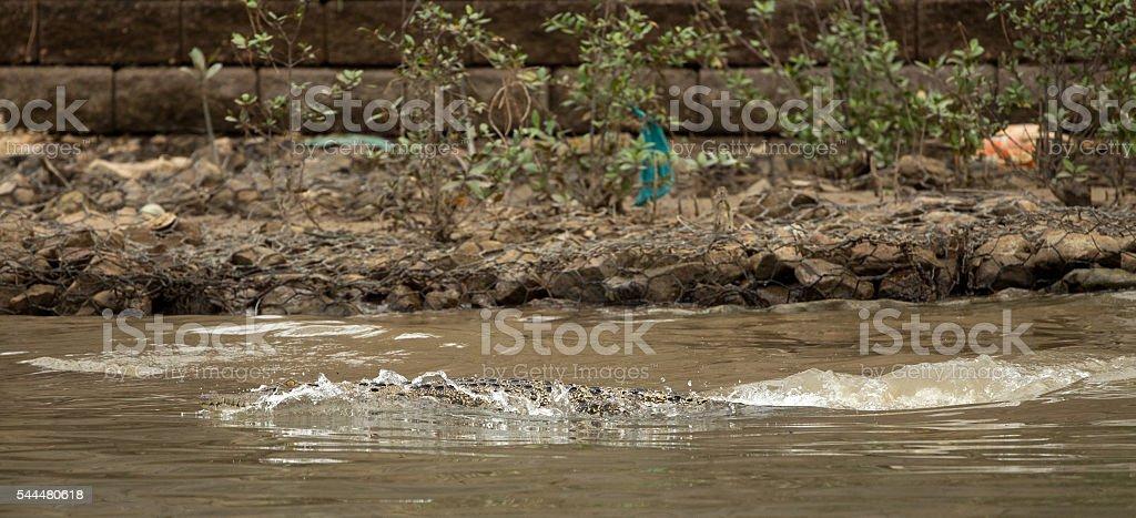 Crocodile Spotted In Capital Bandar Seri Begawan Of Brunei