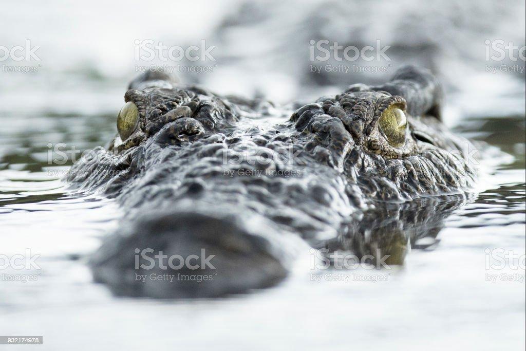 Krokodilleder-Swimmingpool – Foto