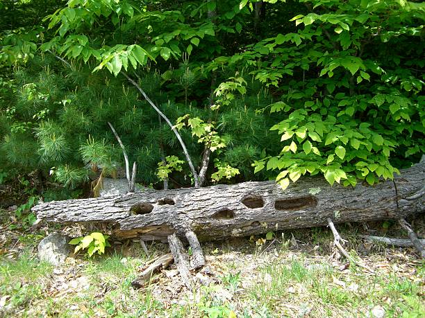 Crocodile Tree stock photo