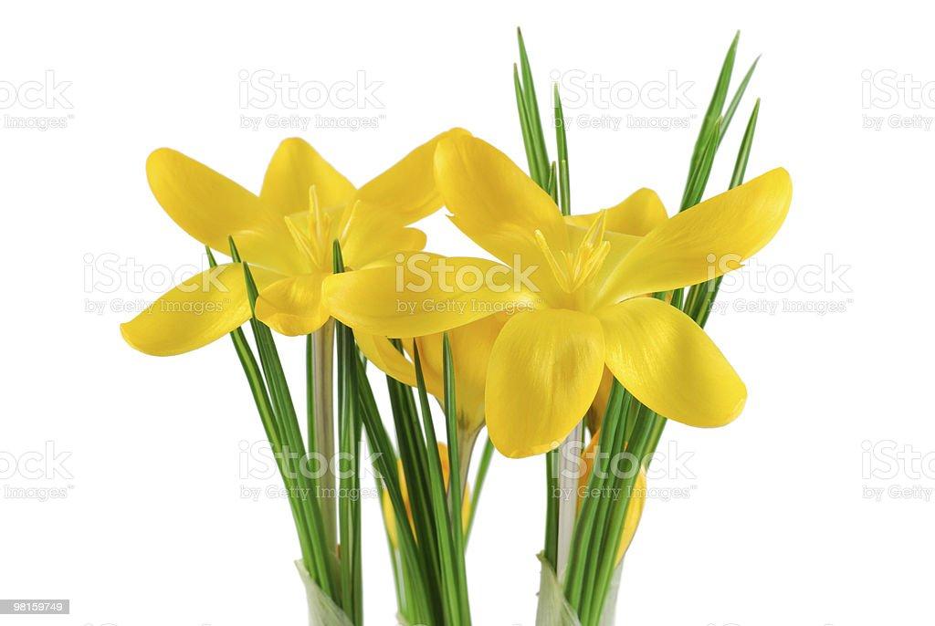 Croco di fiori foto stock royalty-free