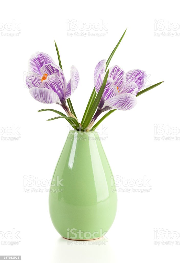Crocus flowers in a vase isolated stock photo