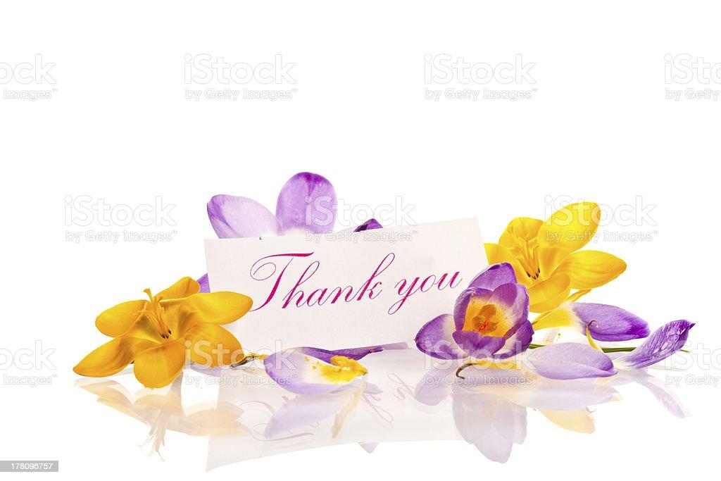 Crocuses with gratitude royalty-free stock photo