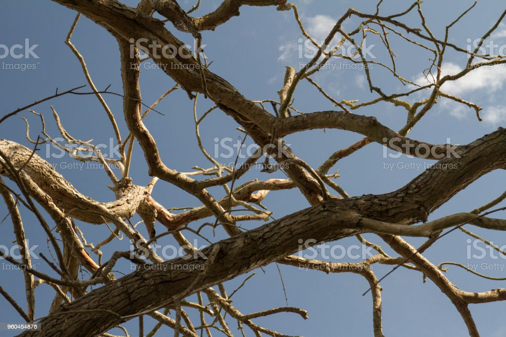 Crooked dead branches against a summer sky stock photo