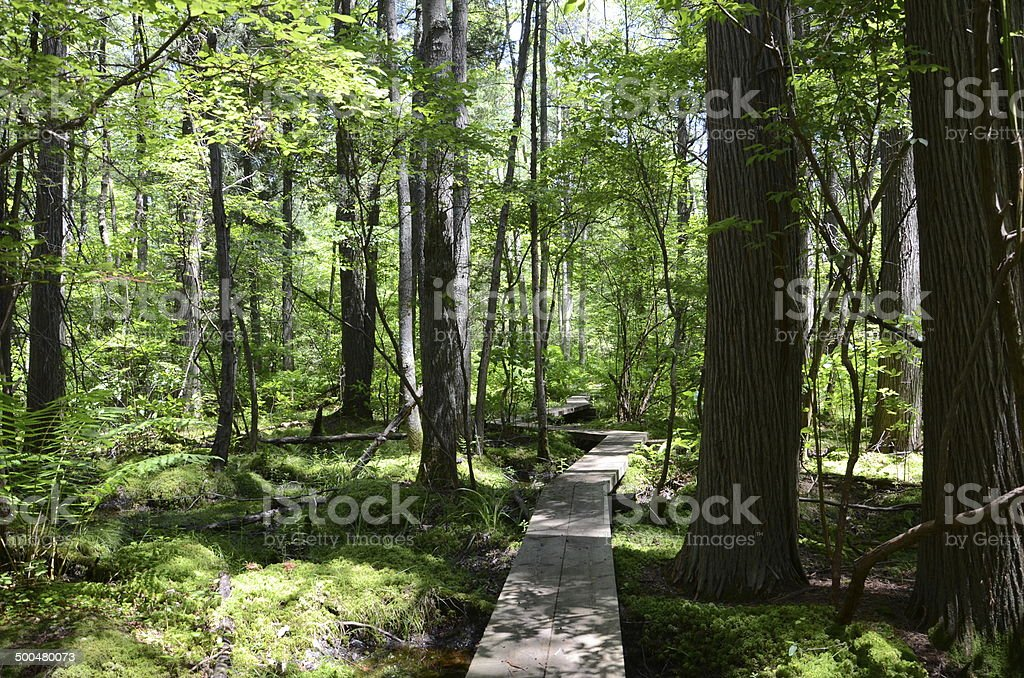 Crooked Path Through Woods royalty-free stock photo