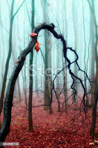 istock Crooked tree in a foggy autumn forest 464898749