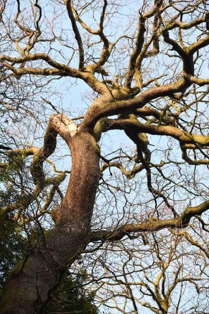 Crooked tree stock photo