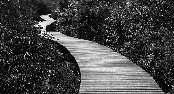 Crooked way to a straight path, B&W stock photo