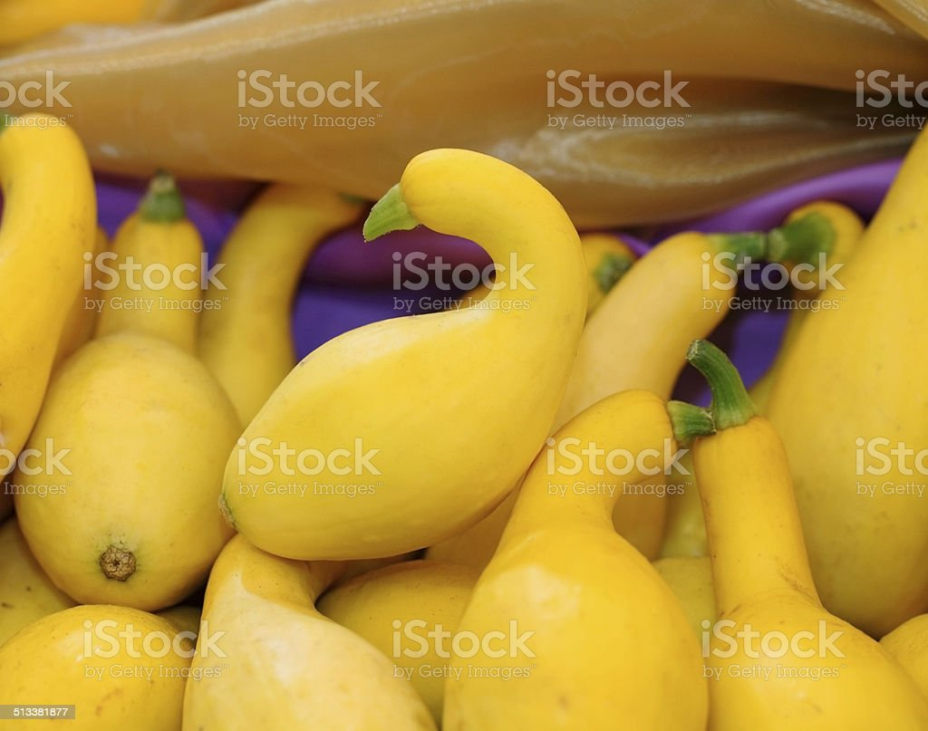 Crookneck squash (botanical name: Cucurbita pepo; species: Yello stock photo