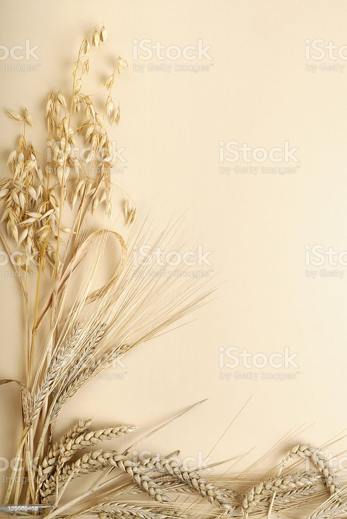 Crop background royalty-free stock photo