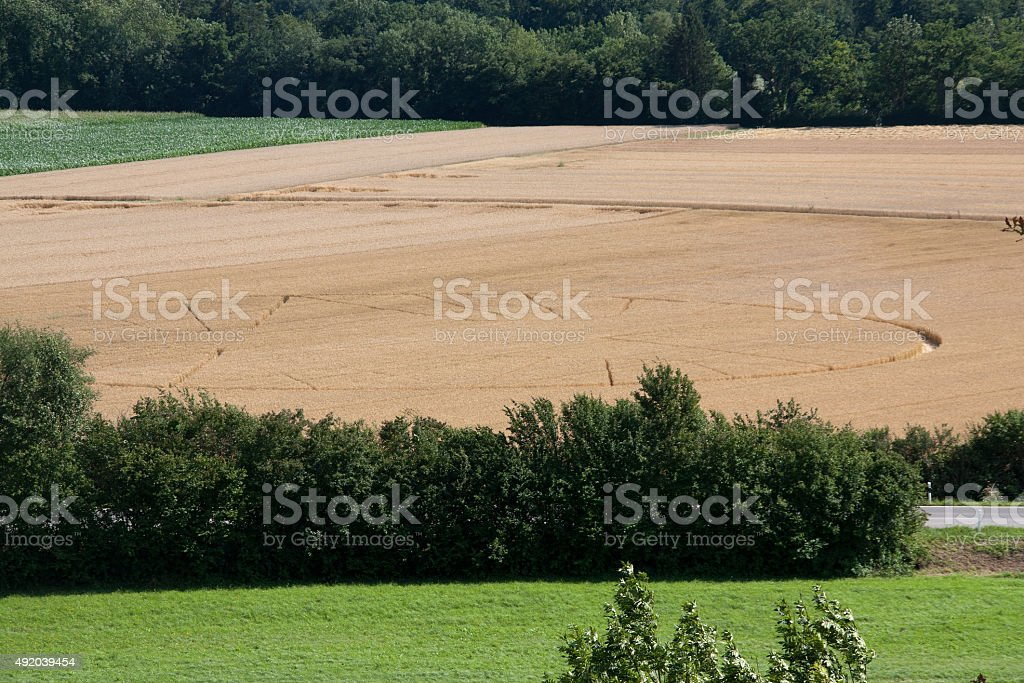 Crop circles in a wheat field stock photo