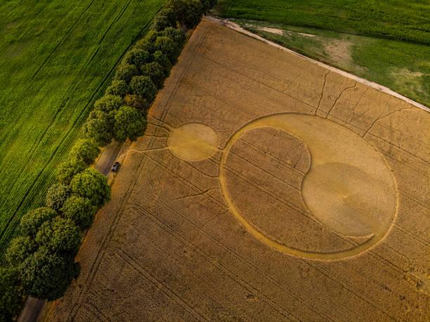 Crop circles in central Poland – zdjęcie
