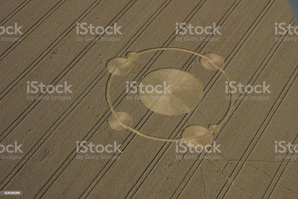 Crop circles in the field of wheat  Agricultural Field Stock Photo