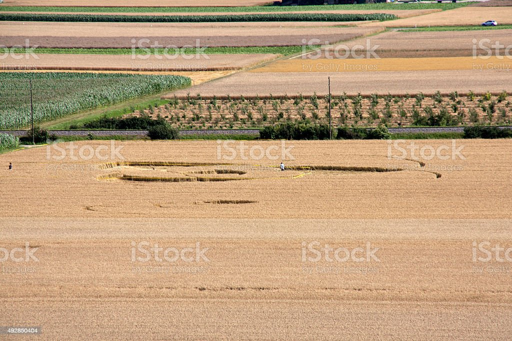 Crop circles in wheat fields stock photo