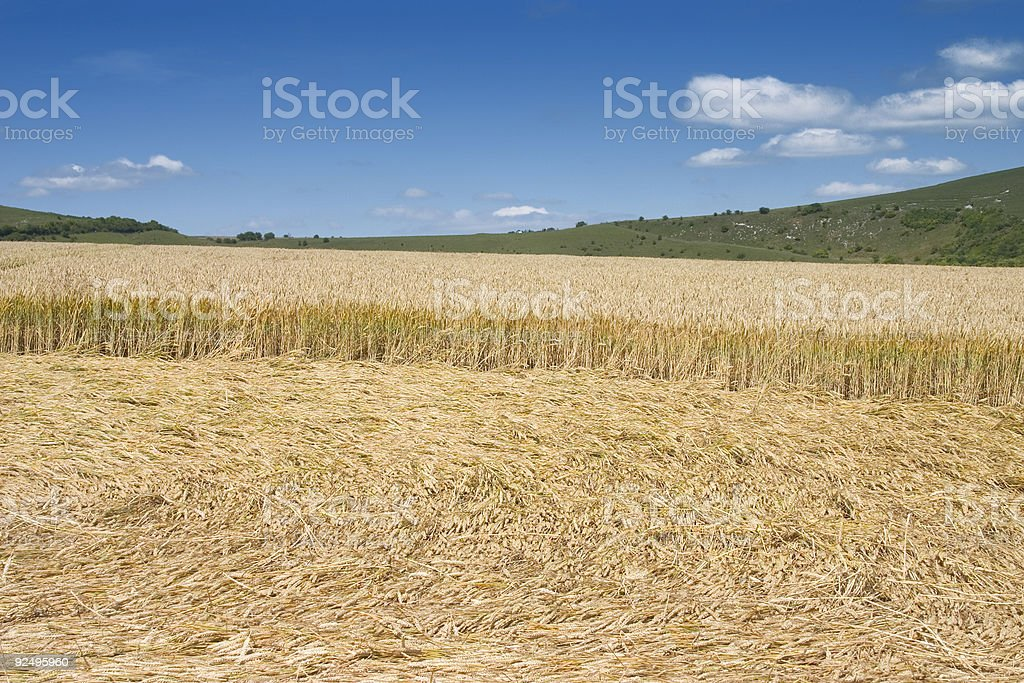 Crop Cricle royalty-free stock photo