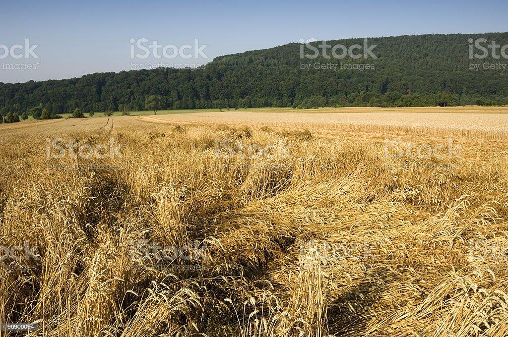 Crop damage royalty-free stock photo