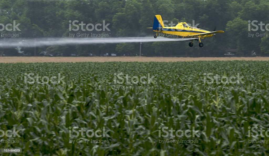 Crop duster drone flying over a cornfield and spraying stock photo