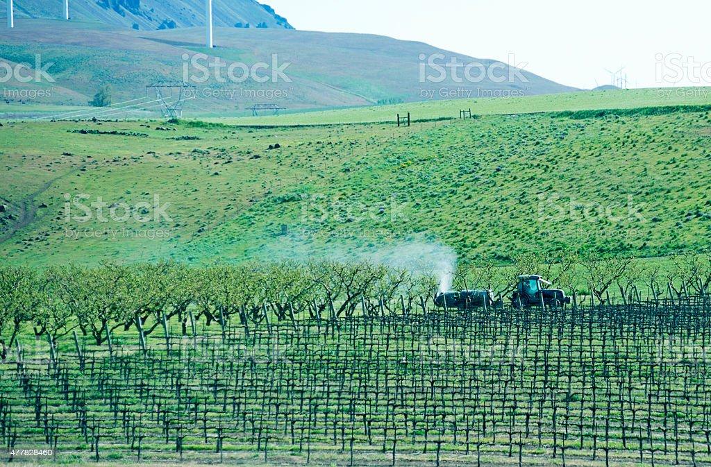 Crop duster spraying new apple crop in Washington state stock photo