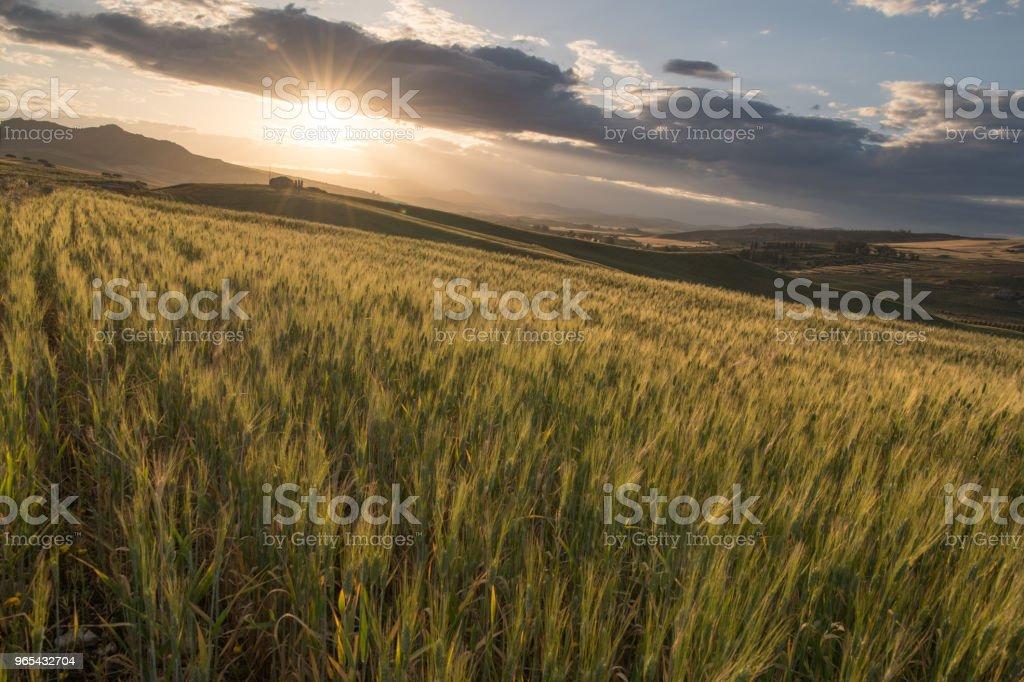 crop farm during sunset zbiór zdjęć royalty-free