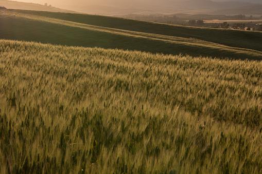 일몰 시 작물 농장 0명에 대한 스톡 사진 및 기타 이미지