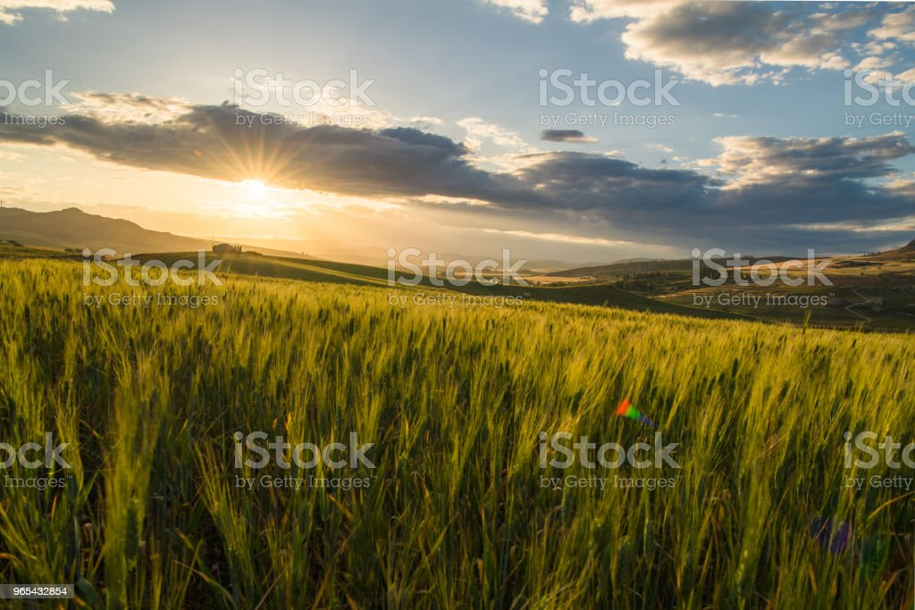crop farm during sunset royalty-free stock photo