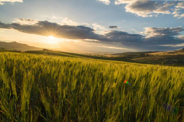 crop farm during sunset – zdjęcie