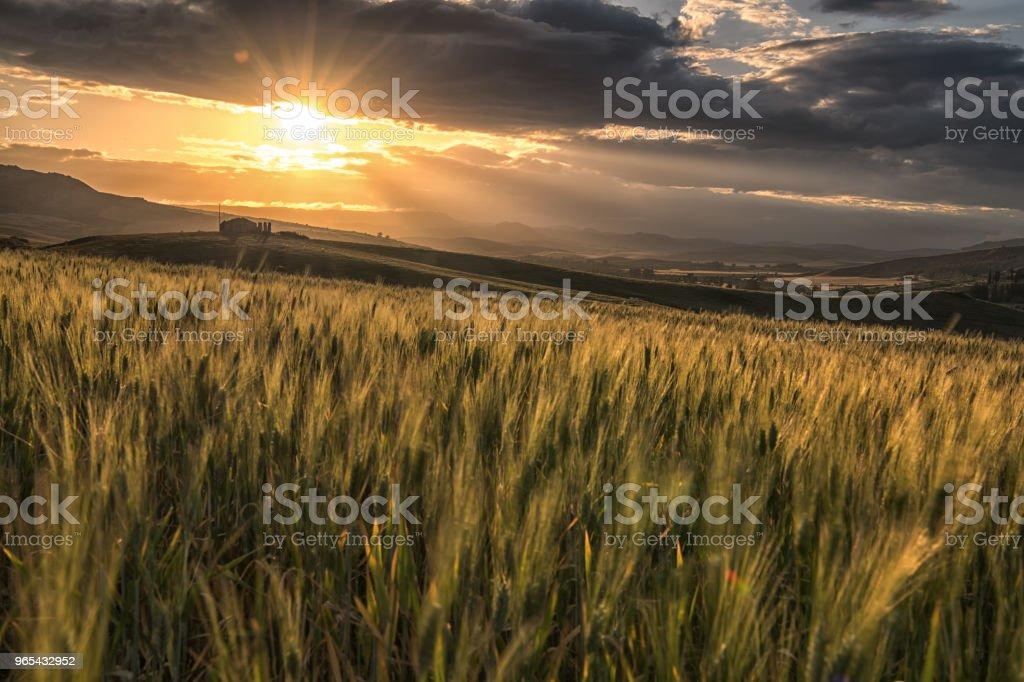 日落期間的農作物養殖場 - 免版稅地中海文化圖庫照片