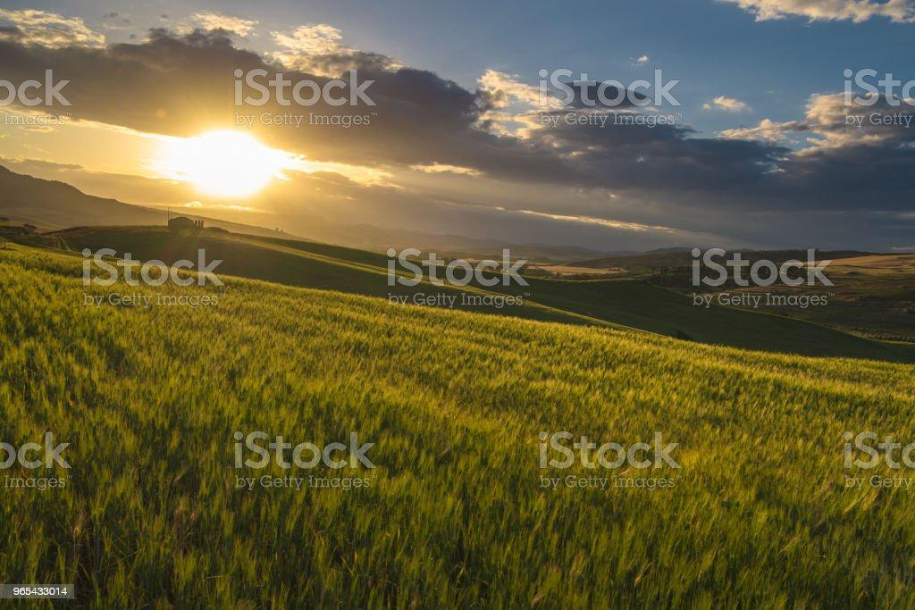 Ernte Bauernhof während des Sonnenuntergangs - Lizenzfrei Agrarbetrieb Stock-Foto