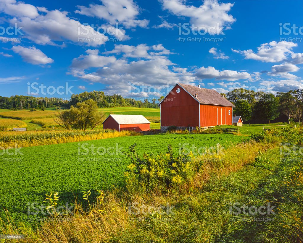 Crop field and Iowa farm at harvest time stock photo