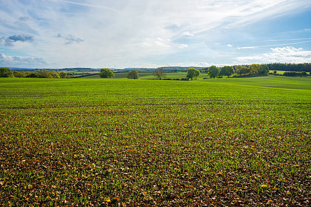 Crop Field - farm stock photo